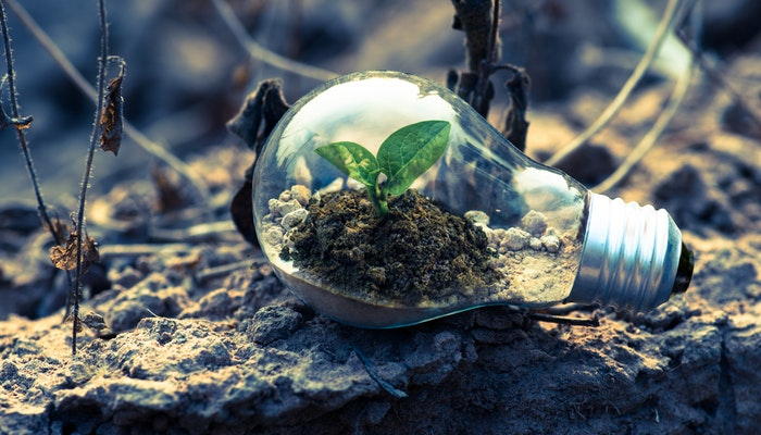 green initiatives for your business